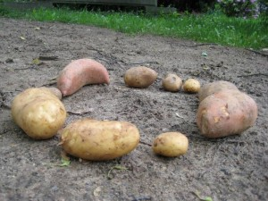 Kartoffeln im Kreis