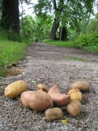 kartoffeln auf weg
