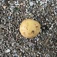 meine freundin, die kartoffel